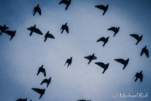 Die Vögel....