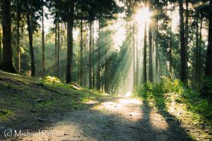 Auch im Wald wir es langsam aber sicher Herbst, aber die Sonne gibt nicht auf!