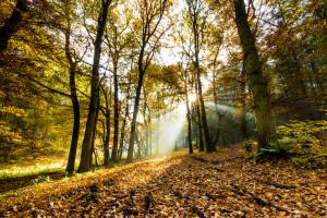 Herbst mit Verspätung